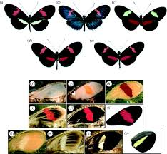 gene expression underlying adaptive variation in heliconius wing
