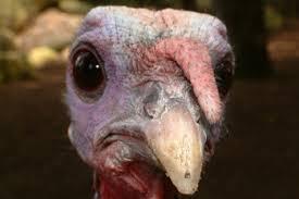 a turkey free thanksgiving feast girliegirl army