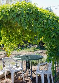 love this idea a wire trellis for my passionfruit gardening