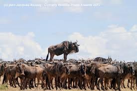 wild animals images The funniest wild animals photos of 2017 jpeg