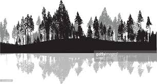 pine trees silhouette background vector getty images