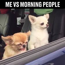 Not A Morning Person Meme - ladbible tag somebody who isn t a morning person
