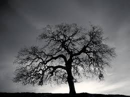 monochrome tree hd wallpaper 517590