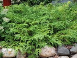 native plants for sale online 215 best landscape plants wi northwoods zones 3 4 images on