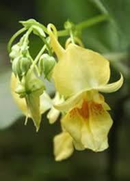 hong kong herbarium hk plant database introduction