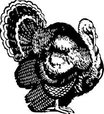 draw thanksgiving turkey cooked turkey drawing clip art library