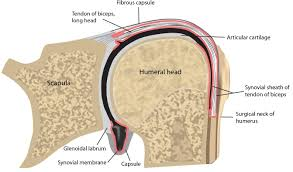 Tendon Synovial Sheath Classifications And Definitions Of Normal Joints Intechopen