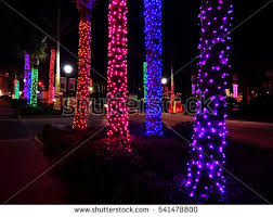 palm tree lights stock images royalty free images