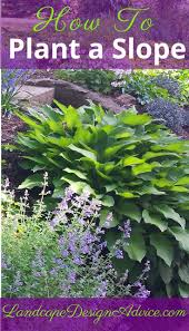 backyard slope landscaping ideas 104 best slope plantings images on pinterest backyard ideas