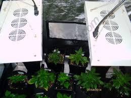 kit chambre de culture led cultiver du cannabis en espaces réduits du growshop alchimia