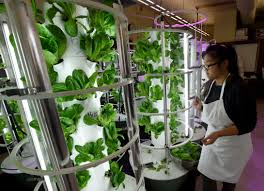 Vertical Aeroponic Garden Futuristic Garden Blooms At Concord High