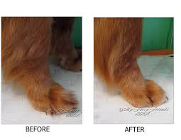 146 best dog grooming images on pinterest dog grooming salons