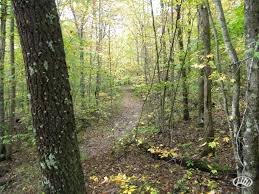 Kentucky Forest images All timber tract in eastern kentucky bordered by daniel boone jpg
