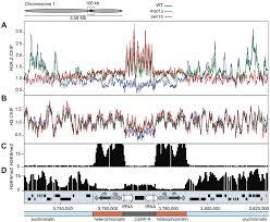the schizosaccharomyces pombe jmjc protein msc1 prevents h2a z