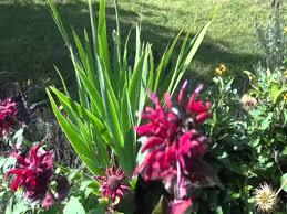 beautiful backyard garden youtube