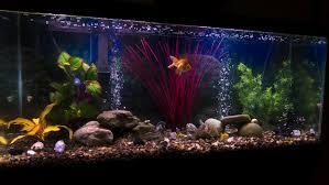 Aquarium Decoration Ideas Freshwater Best Fish For 55 Gallon Freshwater Aquarium Google Search Fish
