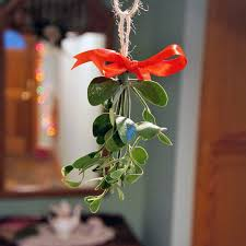 where to buy mistletoe small classic 800 800 america s mistletoe shop