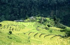 nepal annapurnacirquit fields green fluorescent farm grain