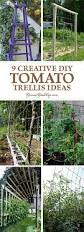Vine Trellis Ideas 9 Creative Diy Tomato Trellis Ideas