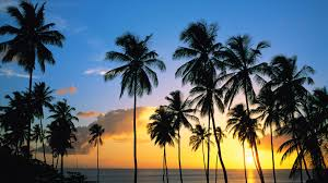 Palm Tree Wallpaper Palm Tree Background Pictures 1920x1080 443 97 Kb