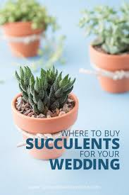 succulent wedding favors succulents as wedding favors tbrb info