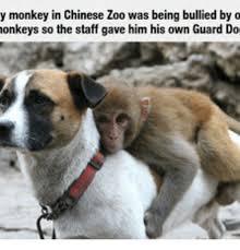 Baby Monkey Meme - 25 best memes about baby monkey meme baby monkey memes