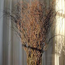 curly willow branches curly willow branches 100 green