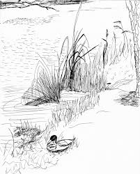 sketch the pond at fort g u2014 with duck curmudgeon in training