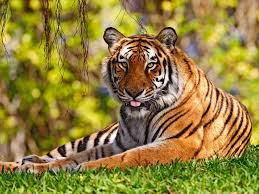 8 best beautiful animals images on pinterest wild animals