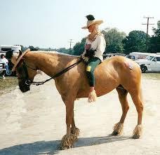 Horse Rider Halloween Costume 199 Horse Costume Images Horses Animal