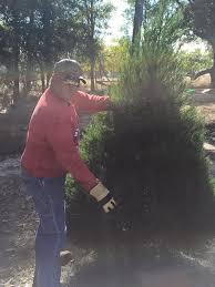 whispering pines christmas tree farm home facebook