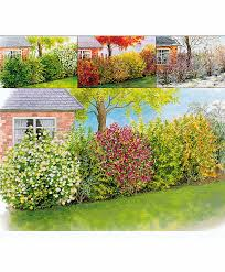 buy four seasons hedging bakker com