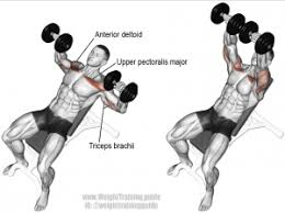 Flat Bench Dumbell Circuit Training For Chest And Triceps My Sport Site