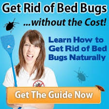 boric acid for bed bugs what temperatures kill bed bugs bed bug control methods