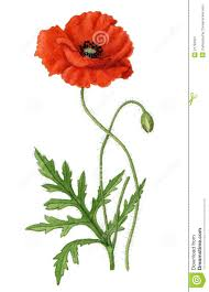 leaves clipart poppy pencil and in color leaves clipart poppy