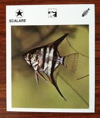 wildlife treasury cards shabby chic zounds designs