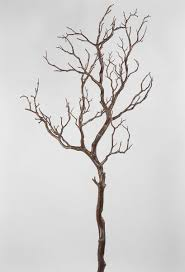 manzanita branches for sale best 25 manzanita tree ideas on manzanita tree
