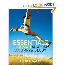 Human Anatomy And Physiology Pdf File Essential Of Human Anatomy And Physiology 10th Edition Pdf Best 10