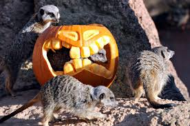 Brookfield Zoo Halloween by Best Halloween Events In The Midwest And Central Us