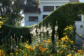 14 ideas to make a small garden look bigger gardenista