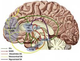 reward circuitry dysfunction in psychiatric and neurodevelopmental