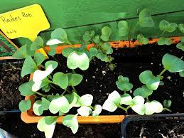 tips vegetable gardening for beginners vegetable gardening for