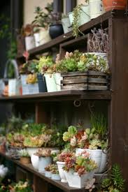624 best plant pots and displays images on pinterest plants