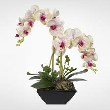 silk orchids real touch stem phalaenopsis silk orchids with succulents