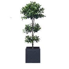 Laurel Topiary - trees lux art silks