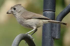 time again for the great backyard bird count u2013 san fernando