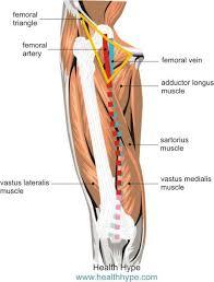 Foot Vascular Anatomy Leg Arteries Thigh Lower Leg Feet Anatomy Names Pictures