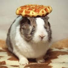 oolong rabbit wikipedia