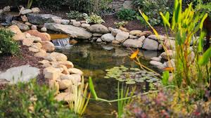Building A Fish Pond In Your Backyard by How To Build A Pond Realtor Com