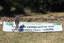 france u0027s strict cheese making rules leave sheep farmers at mercy